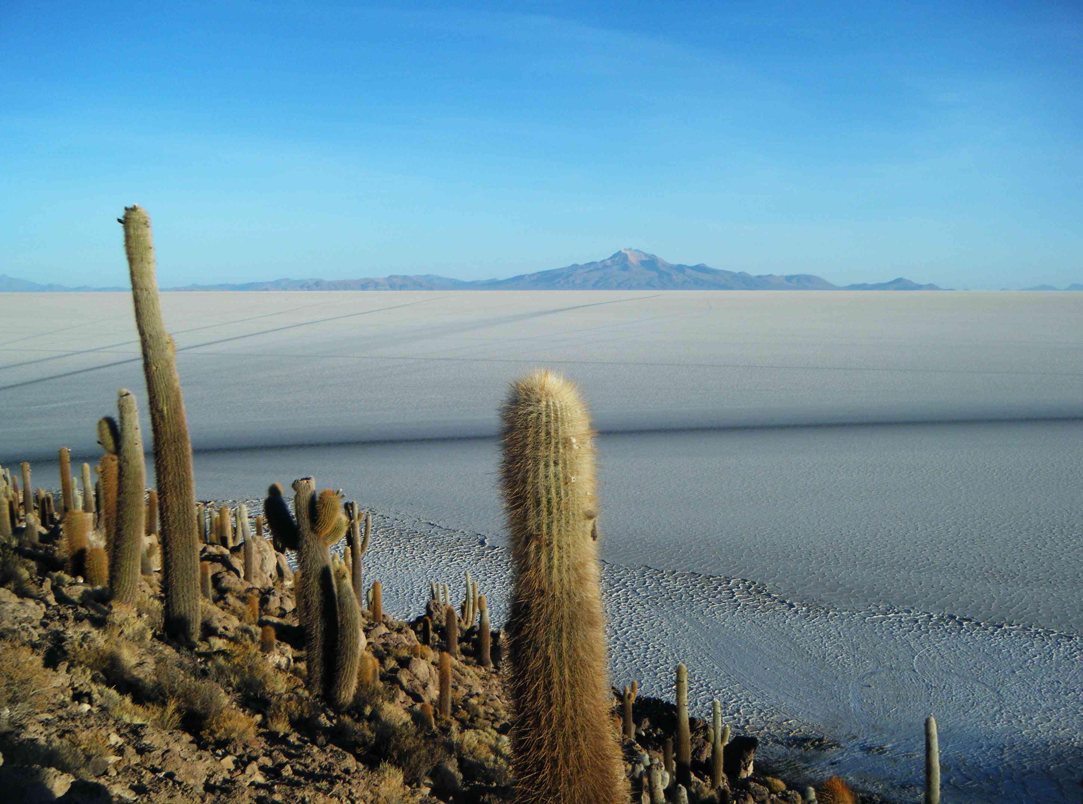 Cacti and rock along the edges of the Isla Del Pescado on the Salar De Uyuni