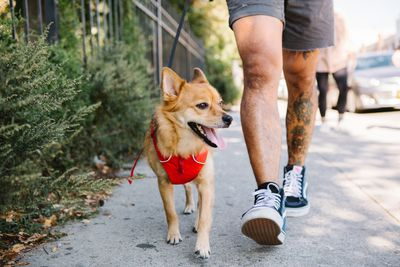 person in shorts with tattoos walks mutt dog down street