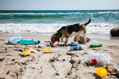 plastic trash on a beach in Bali
