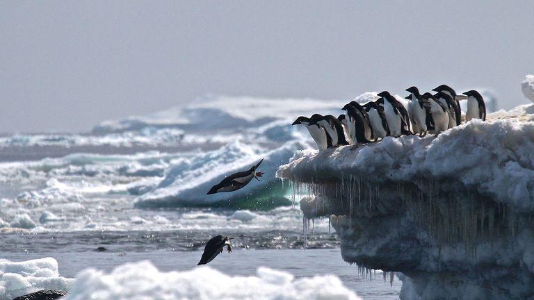 Los científicos encuentran una 'supercolonia' secreta de 1,5 millones de pingüinos