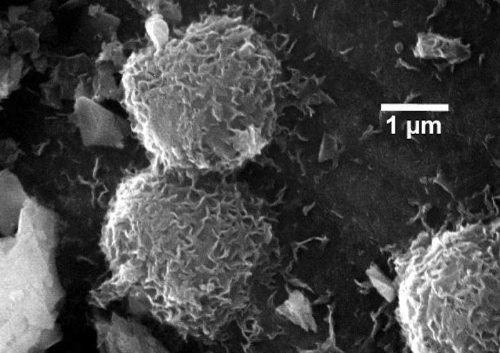 methanogenic archaea