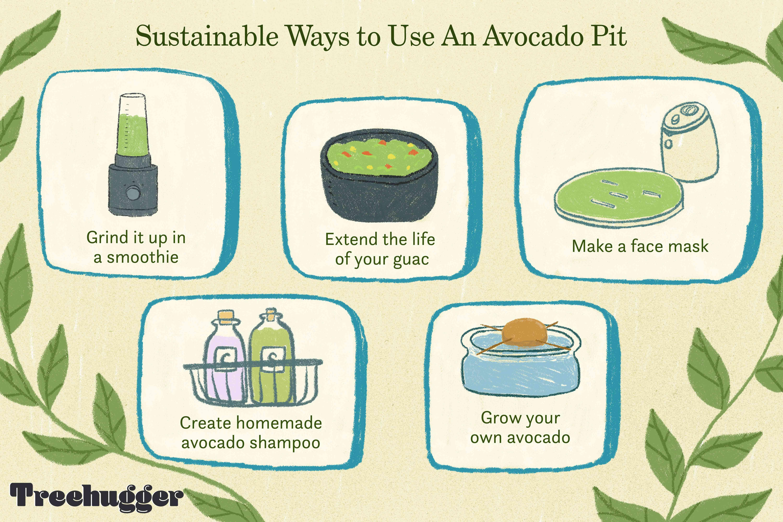 sustainable ways to use avocado pit illustration