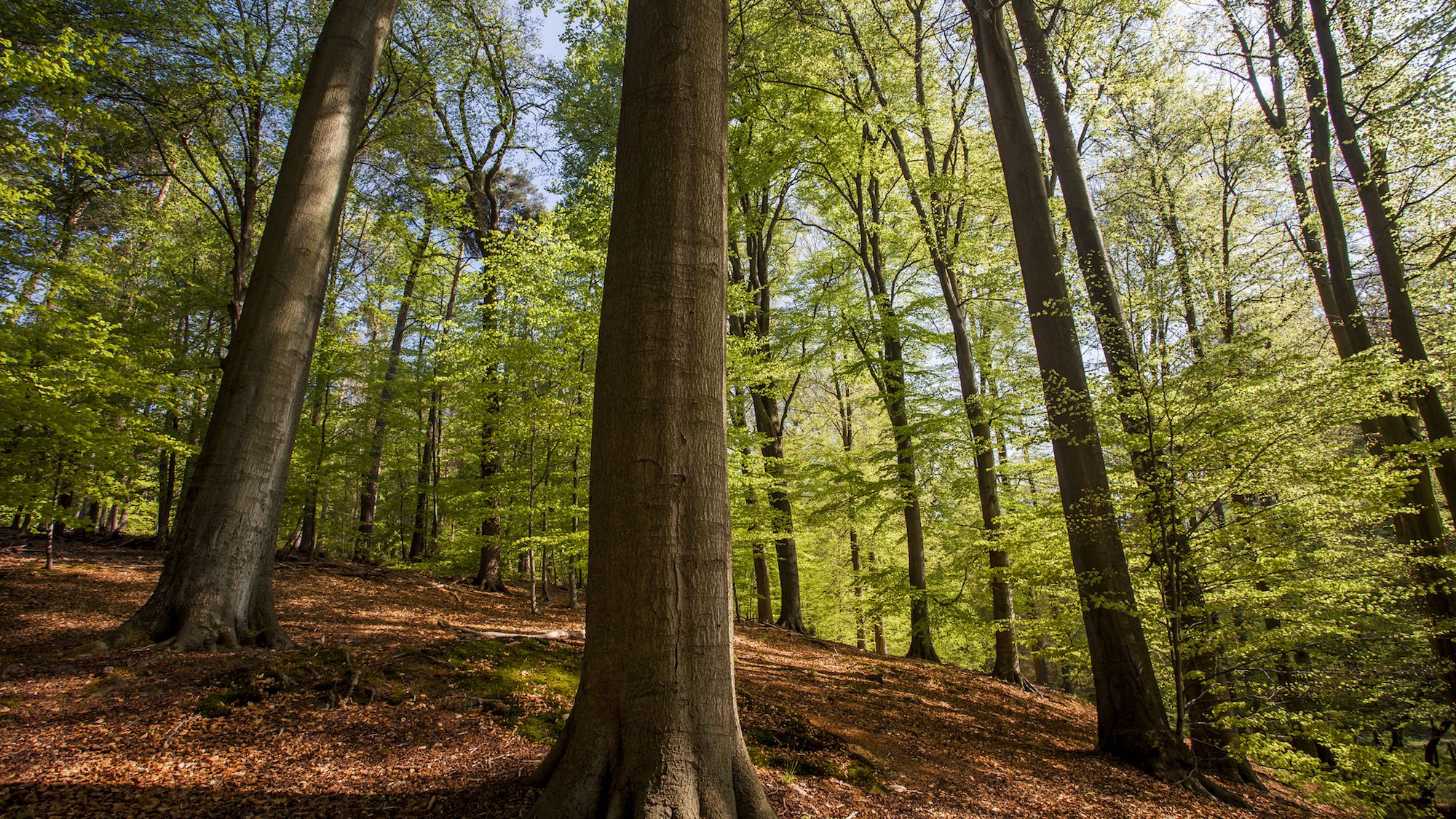 Wood tree hairwood pic