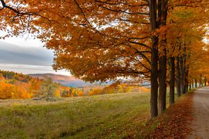 Maple-lined road in Vermont looking over a field and mountains, trees changing colors for Autumn
