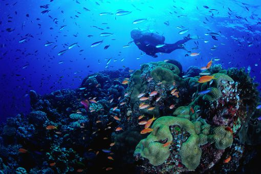 diver and fish on Great Barrier Reef