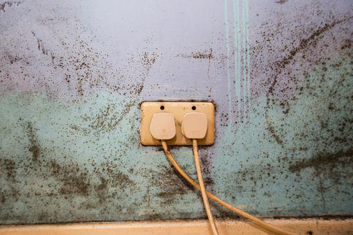 Mold on Bedroom Wall