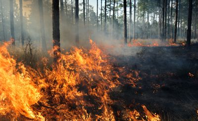 The middle of a forest fire