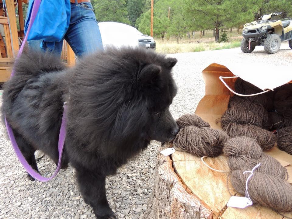 dog sniffs fiber made from dog hair