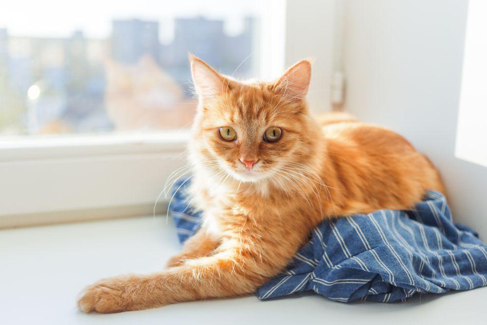 cat lying clean laundry