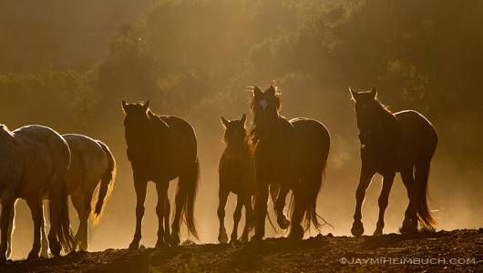 mustangs move together at sunrise