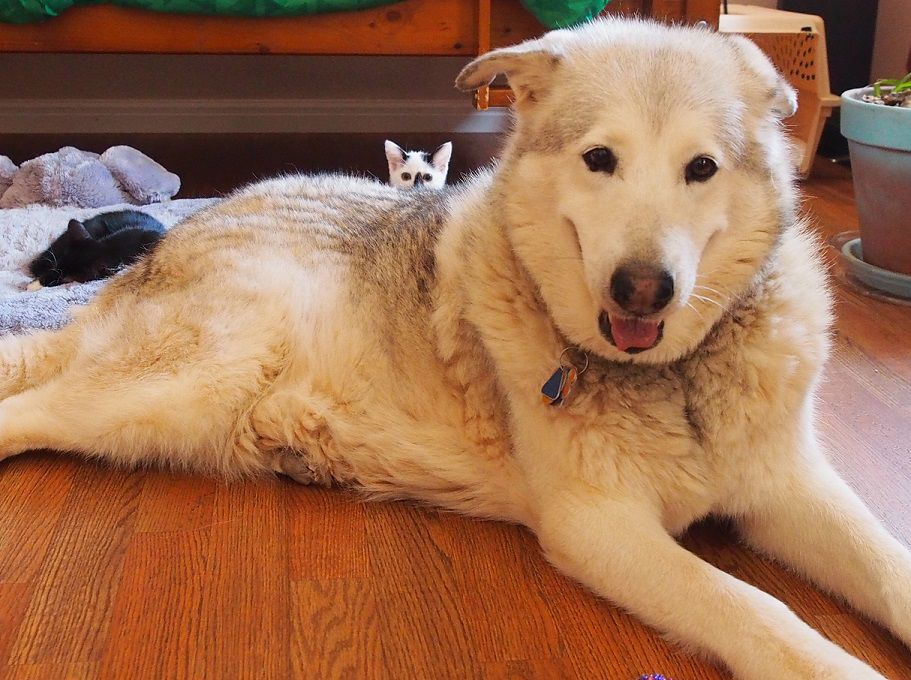 kittens cuddling with dog on bed