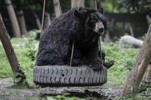 Moon Bear Rescue Centre In Chengdu