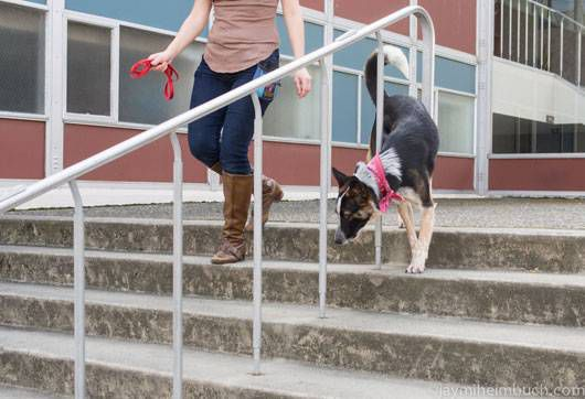 Niner weaves in and out of stairs' railing