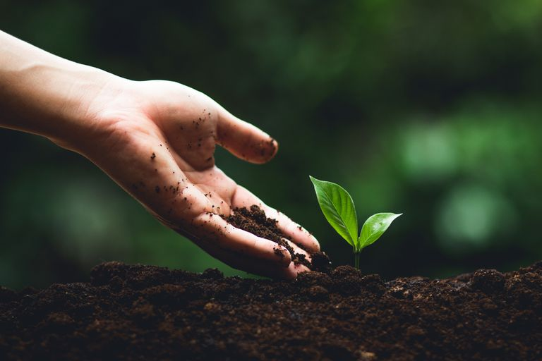 Hand covered in soil reaching down toward a small green plant in the dirt