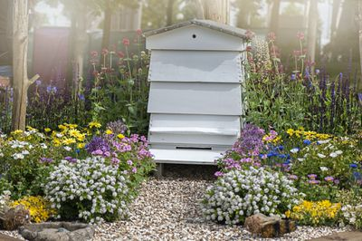 beehive surrounded by wildflowers