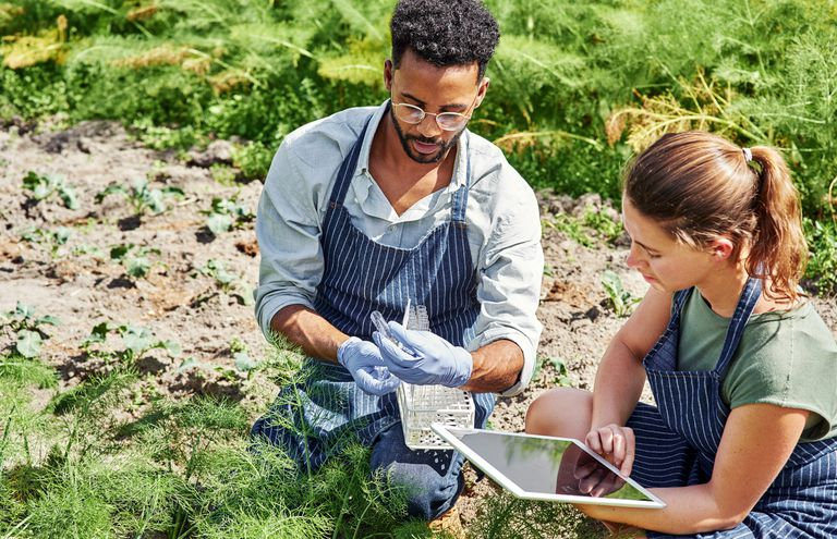 Two young botanists, one male and one female, use a digital tablet while fertilizing crops and plants outdoors on a farm