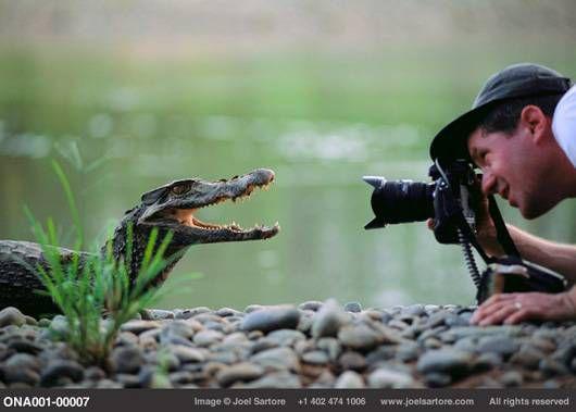 Joel Sartore with caimen