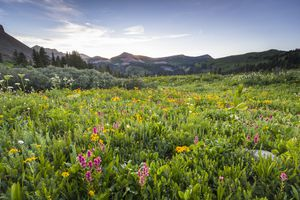 Pink and yellow wildflowers against a prairie and mountain backdrop.