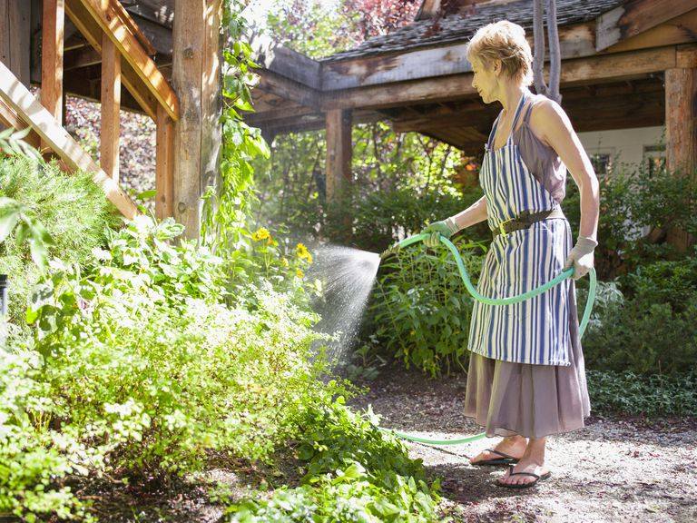 A mature woman waters her garden with a green hose.