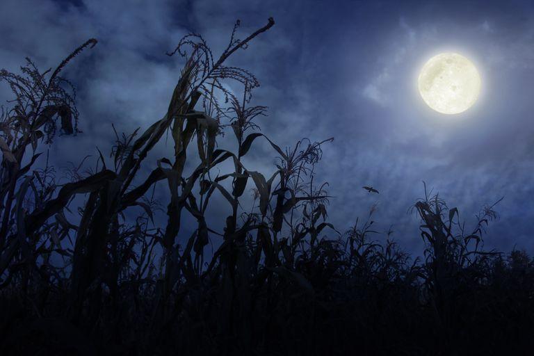 full moon above cornfield