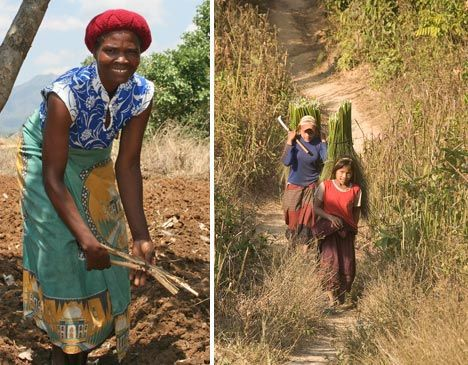 women workers farms villages photo