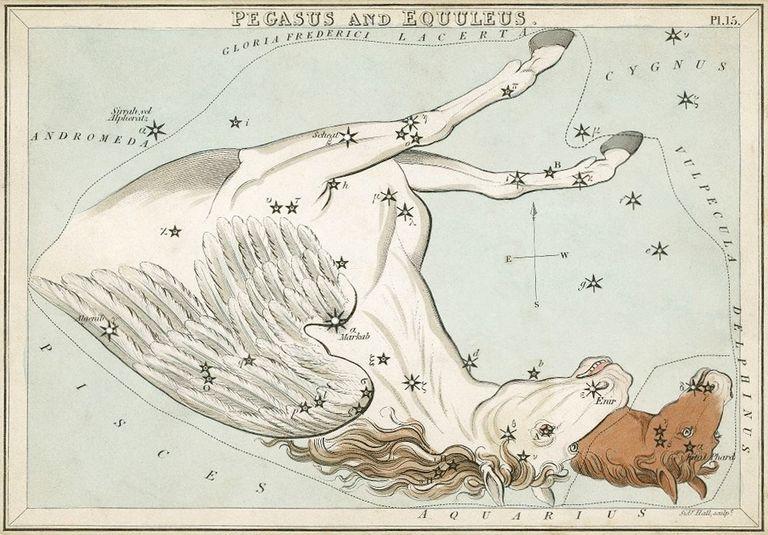 Pegasus and Equuleus constellation card