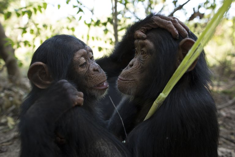 Otros animales también tienen emociones 'humanas'