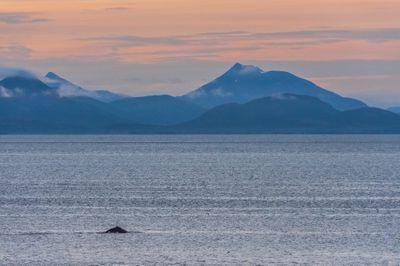 Humpaback whale in Bristol Bay, Alaska