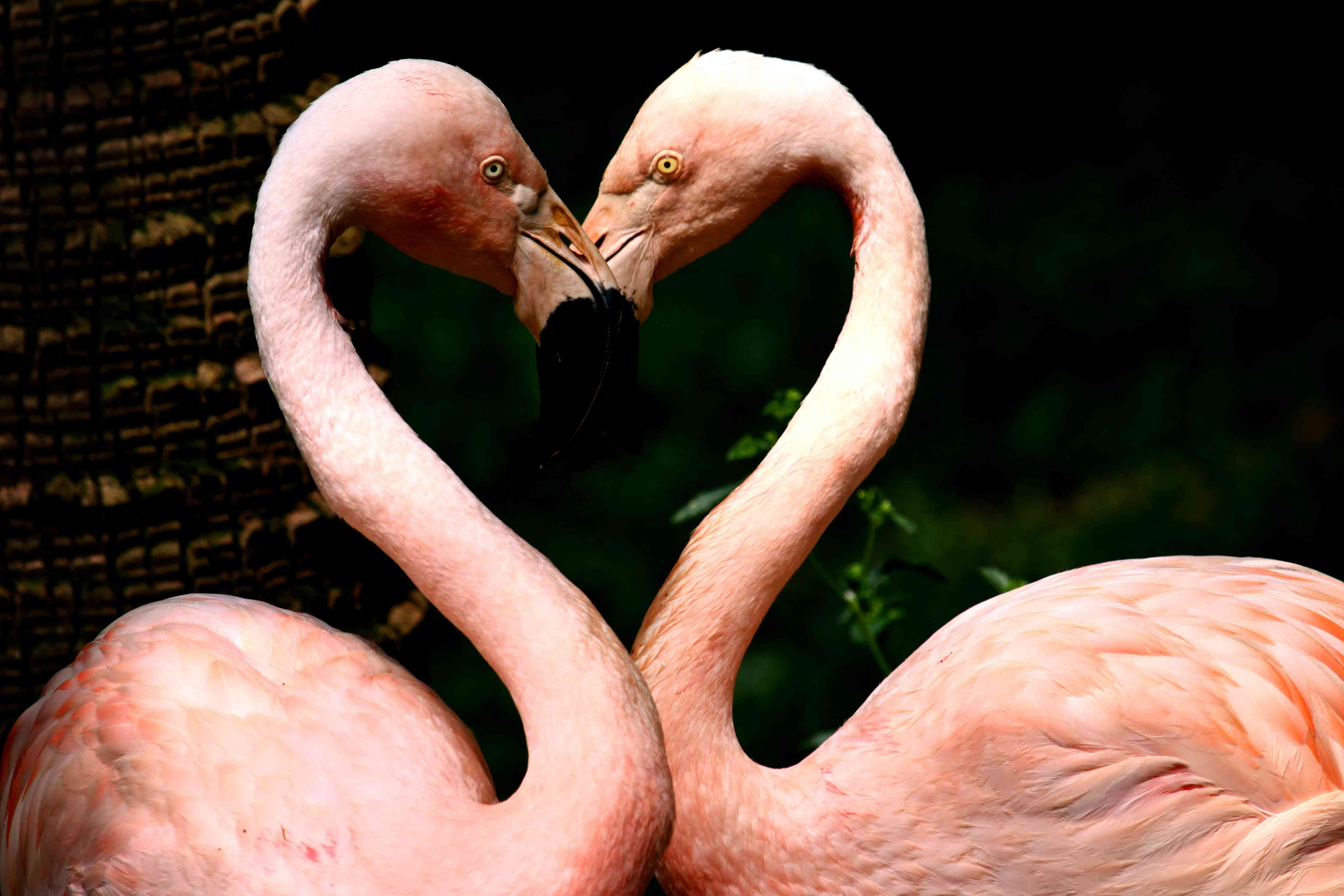 Love by heart