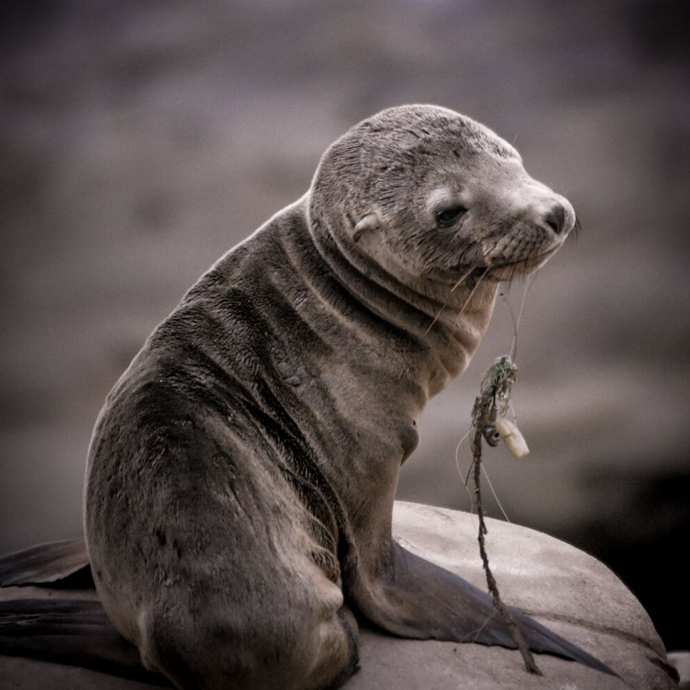 seal with plastic