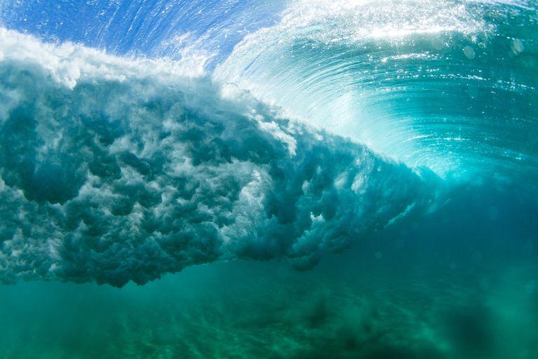 ¿Qué sucede con la fauna marina durante los huracanes?