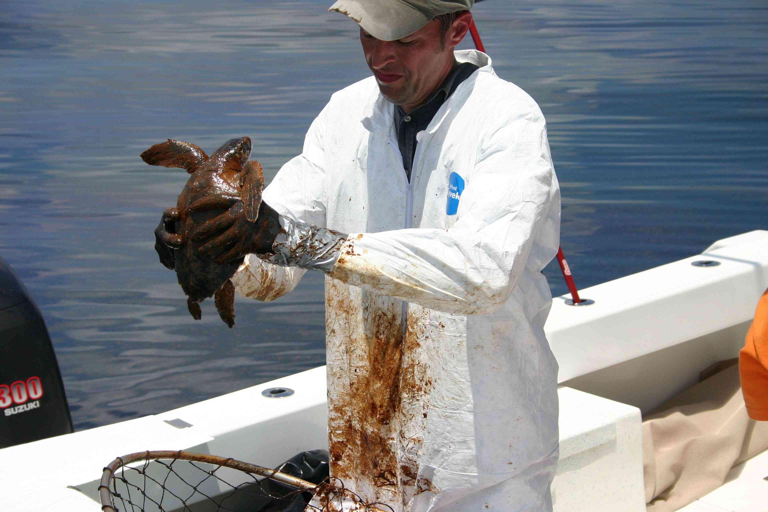 NOAA veterinarian prepares to clean an oiled Kemp's Ridley turtle