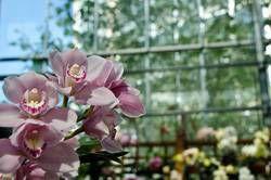 Atlanta Botanical Garden orchids