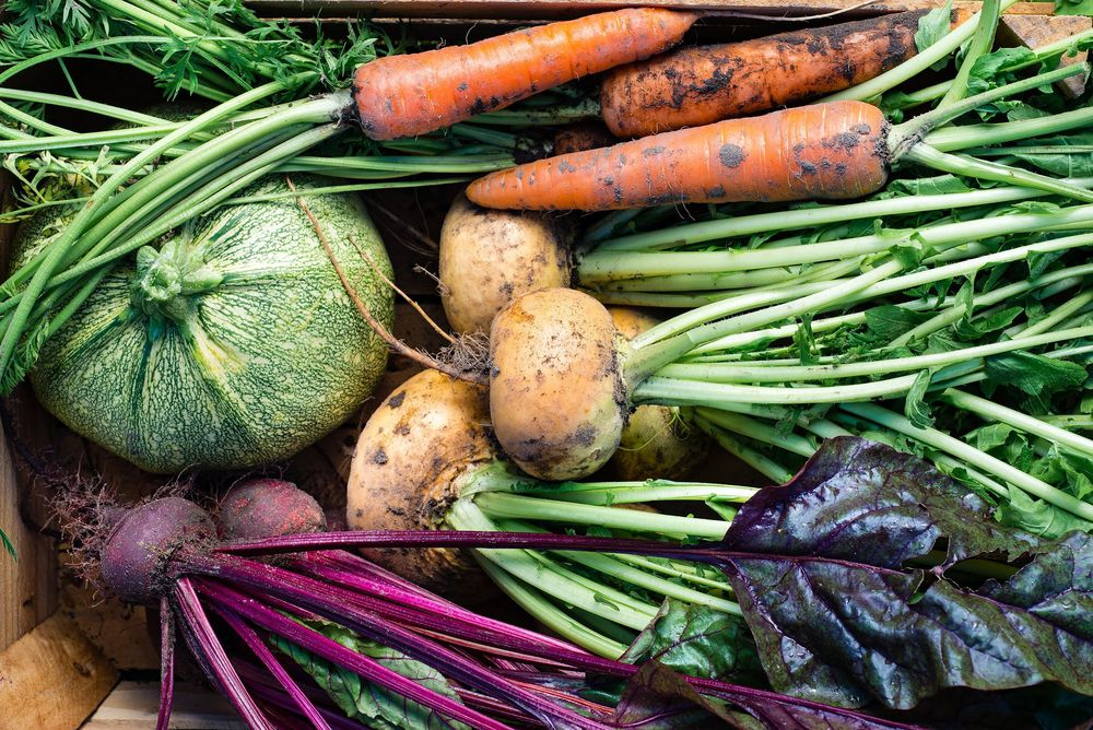 Vegetables to Grow During Fall