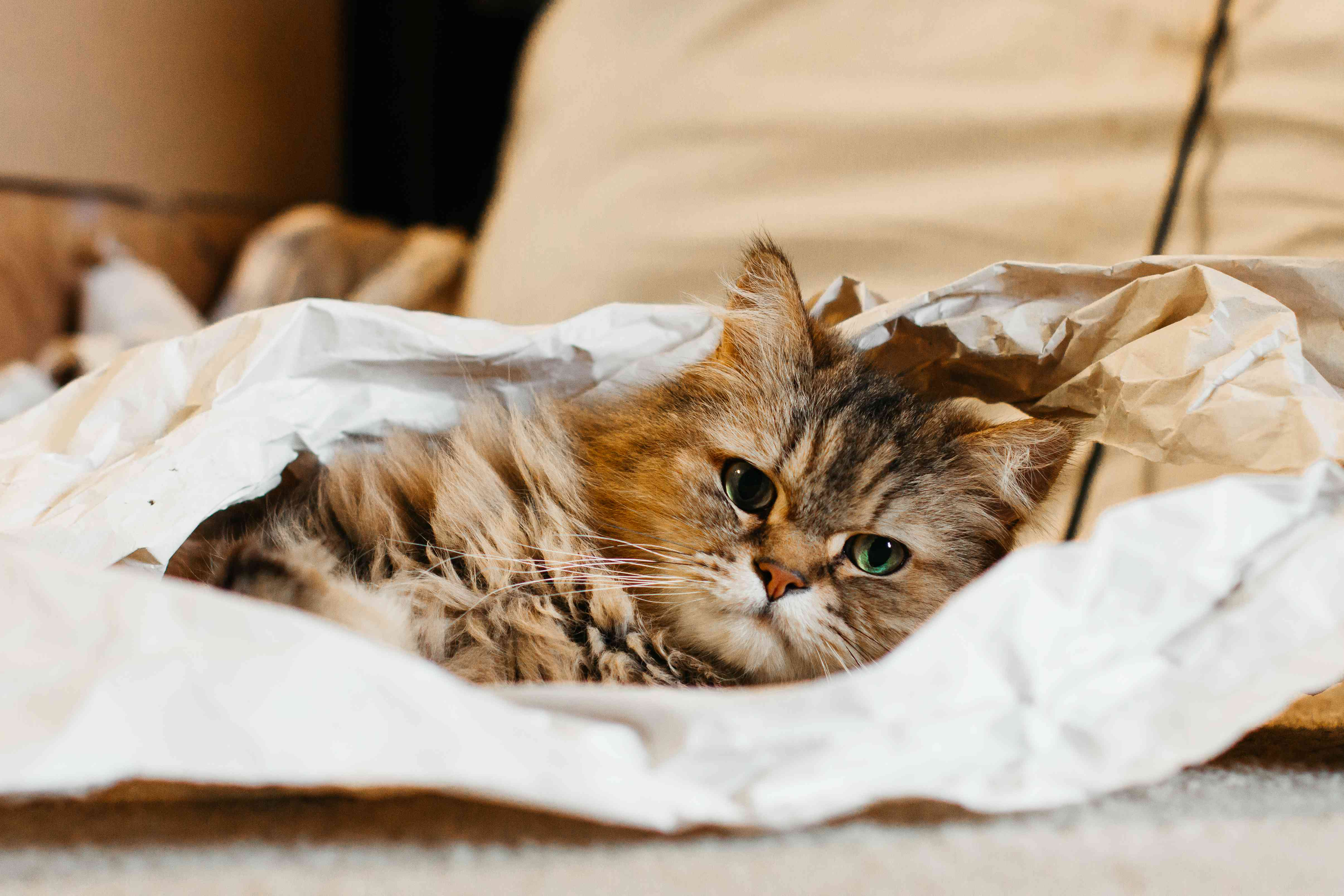 brown cat lays on crumpled up paper