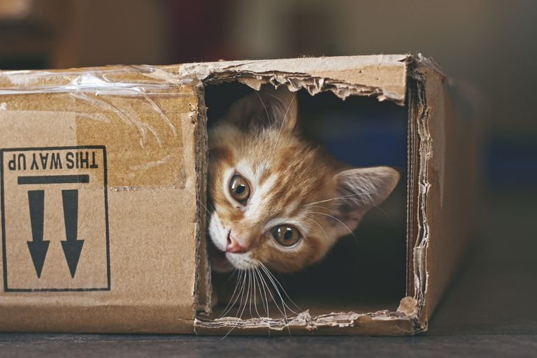 Ginger kitten playing in a cardboard box