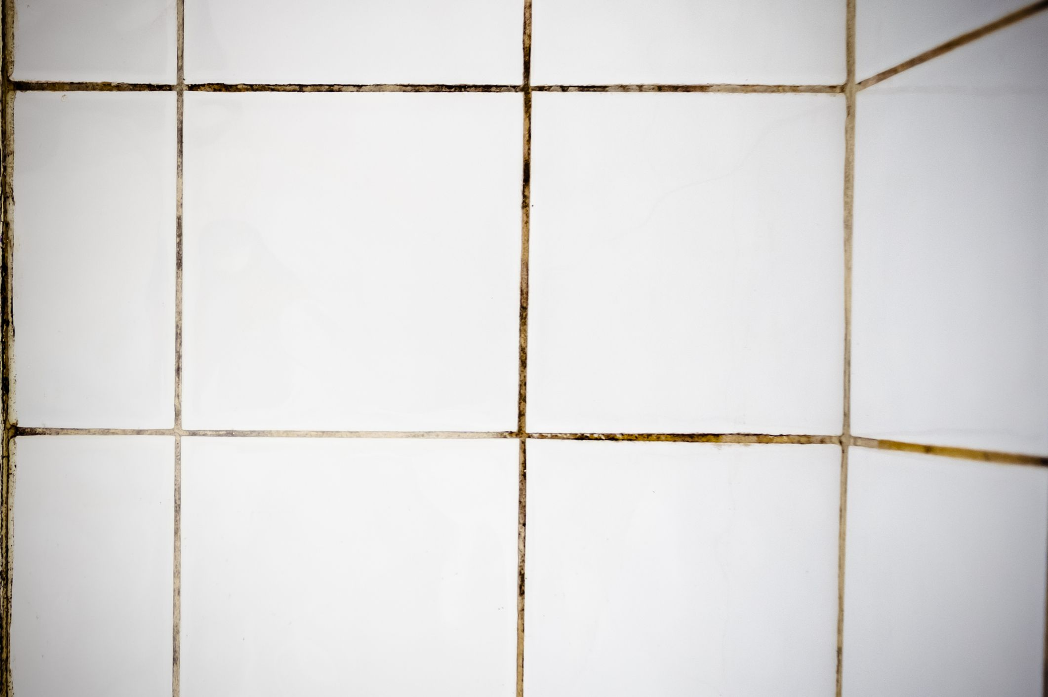 Mold on grout between white square tiles.