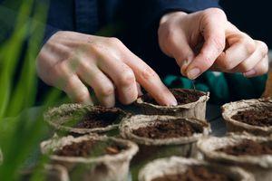 a woman fills seed pots