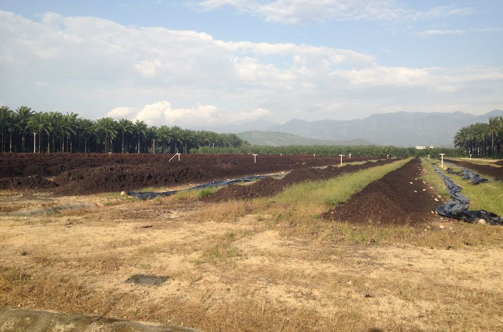 compost heaps at palm oil processing facility