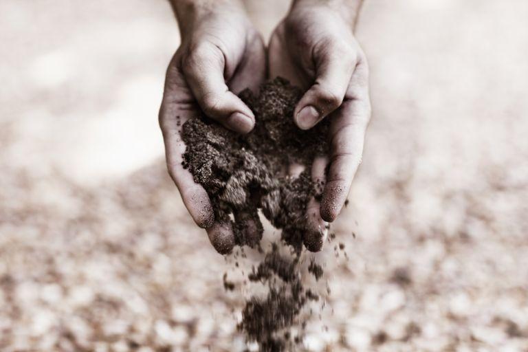 Biorremediación: Uso de organismos vivos para limpiar el medio ambiente