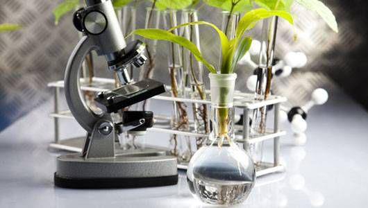 5 plantas medicinales que puede tener a mano