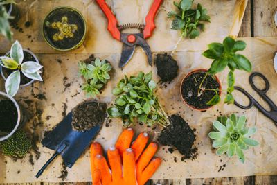Table with plants being potted, gardening gloves, shears, and a trowel