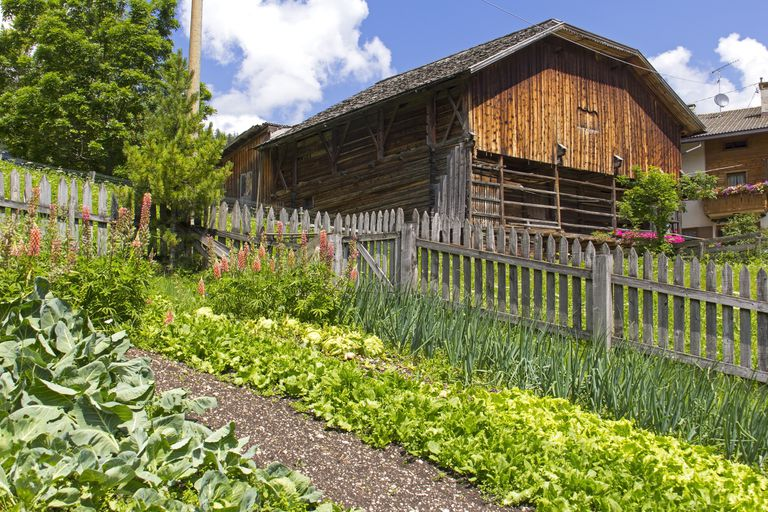 A small farm with vegetables growing in a garden surrounded by a picket fence.