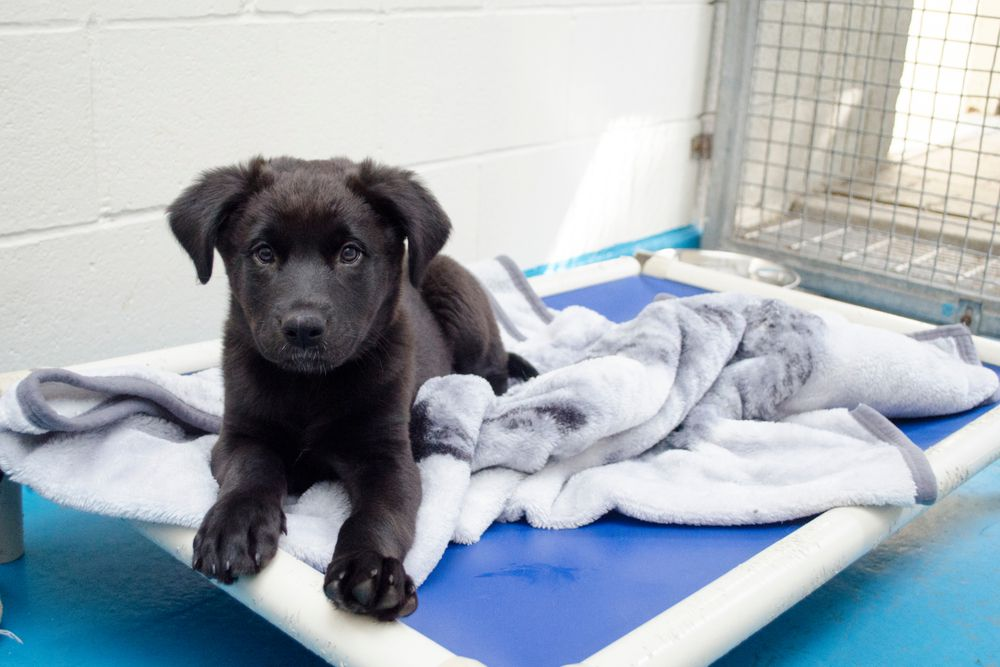 puppy with blanket at shelter