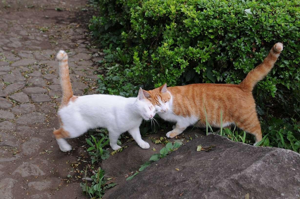 cat greeting