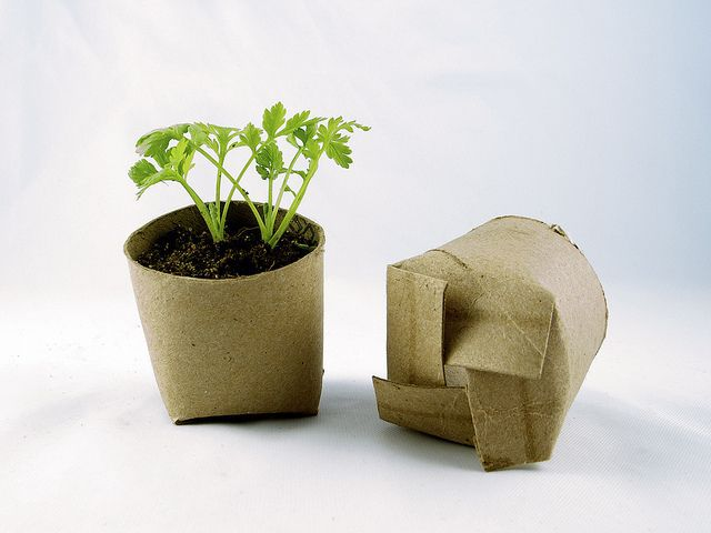 toilet paper roll seed pots