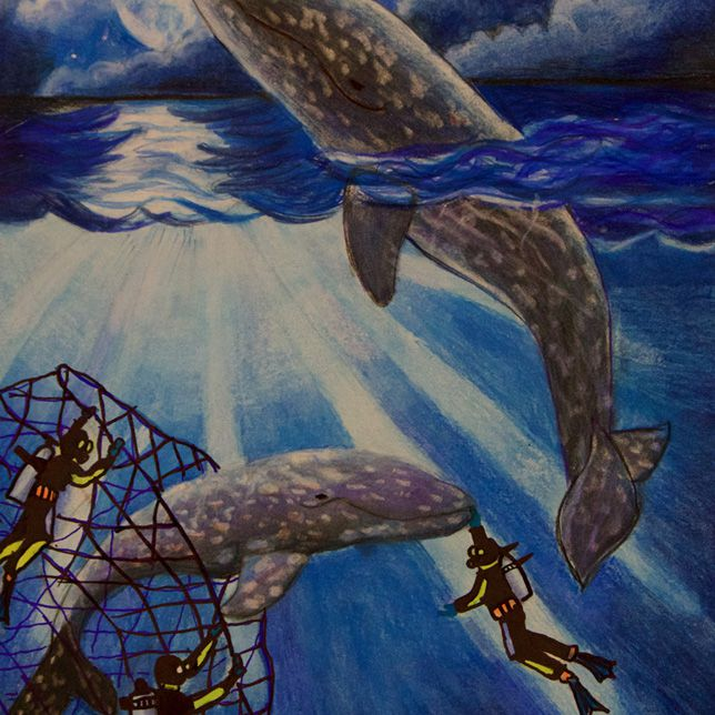 A painting of the North Pacific right whale caught in net