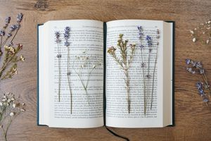 pressing fresh flowers between pages of heavy book surrounded by other sprigs